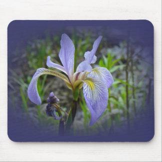 Blue Flag - Wild Iris Mousepads