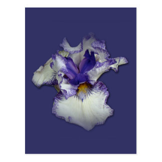Blue Flag - Wild Iris Postcard