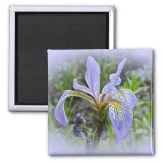 Blue Flag - Wild Iris Square Magnet