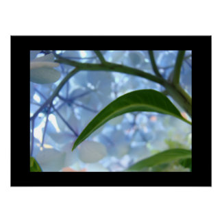 Blue Floral Fine Art Prints Hydrangea Flowrers Poster