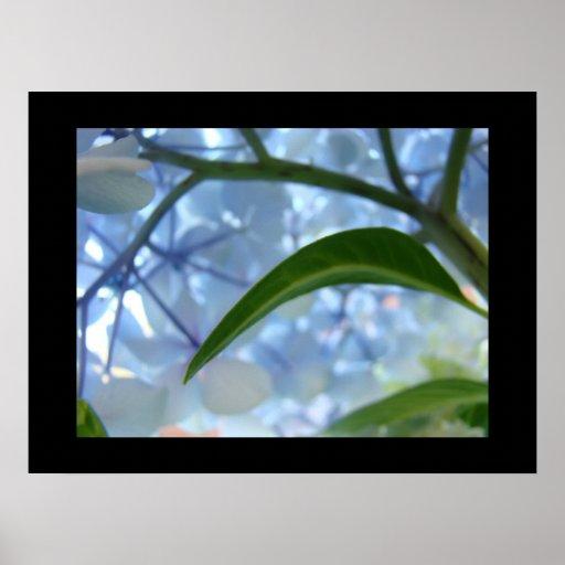 Blue Floral Fine Art Prints Hydrangea Flowrers Print