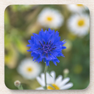 Blue flower hard plastic coasters
