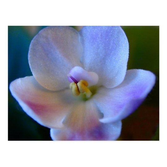 Blue Flower.jpg Postcard