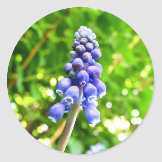 Blue Flower Stickers - Grape Hyacinth