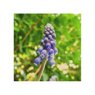 Blue Flower Wood Wall Art - Grape Hyacinth