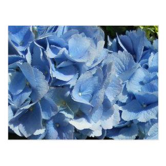 Blue Flowers Hydrangea Postcard