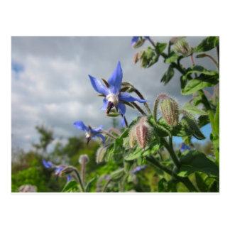 Blue Flowers Vines Peace Love Destiny Garden Party Postcard