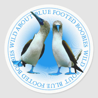 Blue Footed Booby Bird Stickers