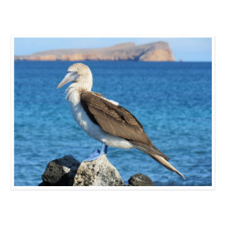 blue footed postcard