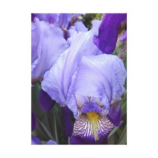 Blue German Irises Canvas Print