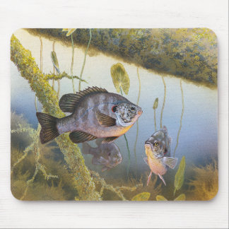 Blue gill mouse pad