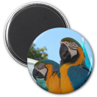 Blue & Gold Macaw Magnet