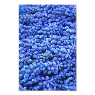 Blue Grape Hyacinth Spring Flower Bundle Photo Art