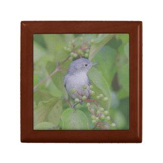Blue-Gray Gnatcatcher Gift Box