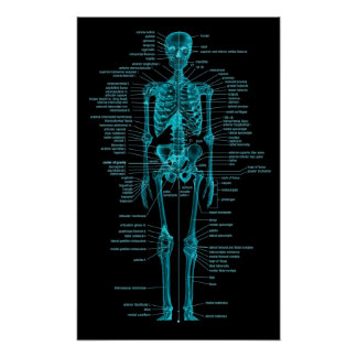 blue-green skeleton poster