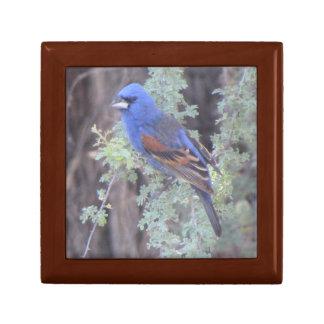 Blue Grosbeak Gift Box
