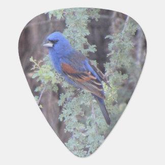 Blue Grosbeak Plectrum