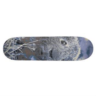 blue guinea pig skate board decks