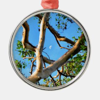 BLUE GUM TREE QUEENSLAND AUSTRALIA Silver-Colored ROUND DECORATION