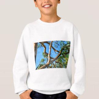 BLUE GUM TREE QUEENSLAND AUSTRALIA SWEATSHIRT