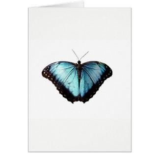 Blue Gypsy Butterfly Blank  Card