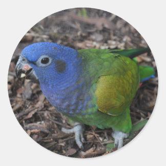 Blue Headed Amazon Parrot on ground Round Sticker