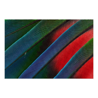 Blue Headed Parrot Feather Design Poster