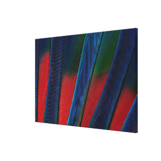 Blue-Headed Parrot Feather Detail Canvas Print