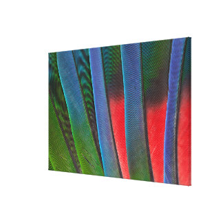 Blue-Headed Parrot Feathers Canvas Print