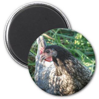 Blue Hen 6 Cm Round Magnet
