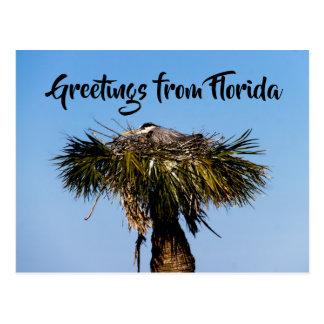 Blue Heron BIrd Nest Tree Personalize Postcard