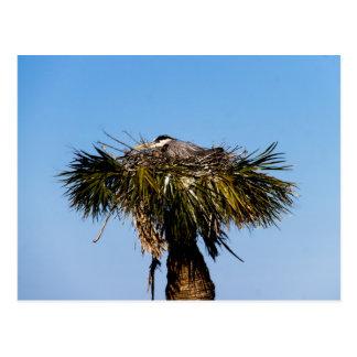 Blue Heron Bird Nest Tree Postcard