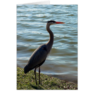 Blue Heron Card