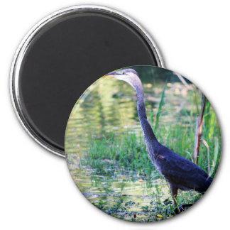 Blue Heron In Pond Magnet