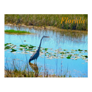 Blue Heron in the Glades - Florida Postcard