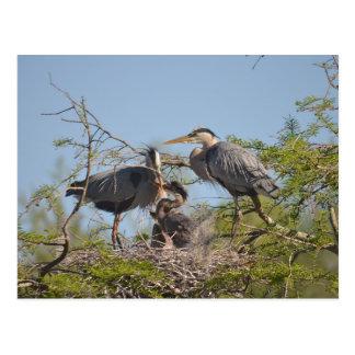Blue Heron Nest Photo Postcard