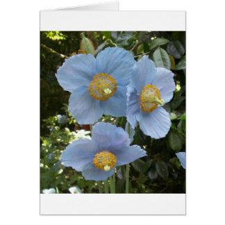 blue himalayan poppy greeting card