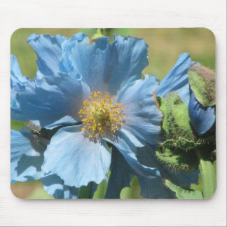 Blue Himilayan Poppy Mouse Pad