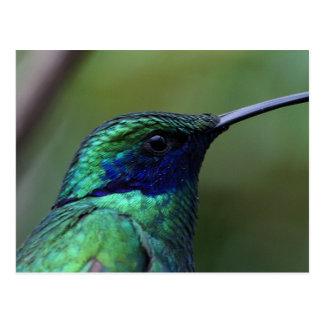 Blue Humming Bird Postcard