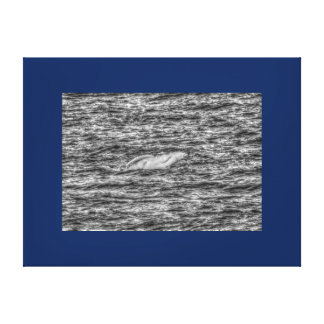 BLUE HUMPBACK WHALE QUEENSLAND AUSTRALIA CANVAS PRINT