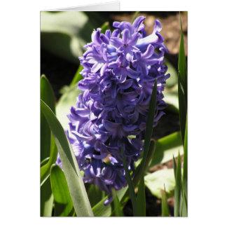 blue Hyacinth card