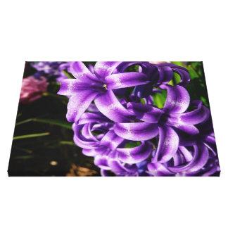 Blue Hyacinth II Spring Floral Canvas Prints