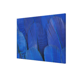 Blue Hyacinth Macaw Feather Design Canvas Print