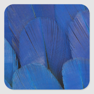 Blue Hyacinth Macaw Feather Design Square Sticker