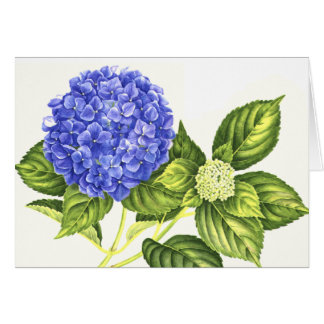Blue Hydrangea and Bud Card