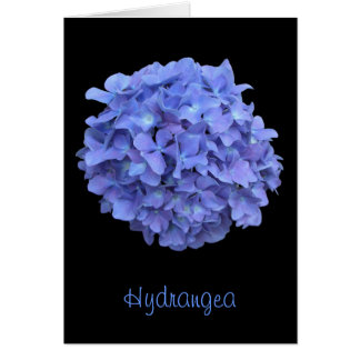 Blue Hydrangea Bloom and Facts Card