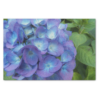 Blue Hydrangea Blossoms Floral Tissue Paper