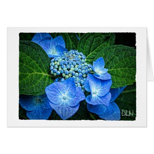 Blue Hydrangea Flower/Floral  Art Card