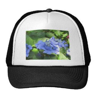 Blue Hydrangea flowers (Hydrangea macrophylla) Cap