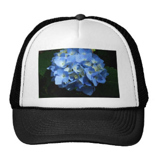 Blue Hydrangea II Cap